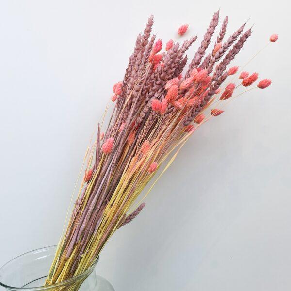 Droogboeket Phalaris Roze tarwe Roze