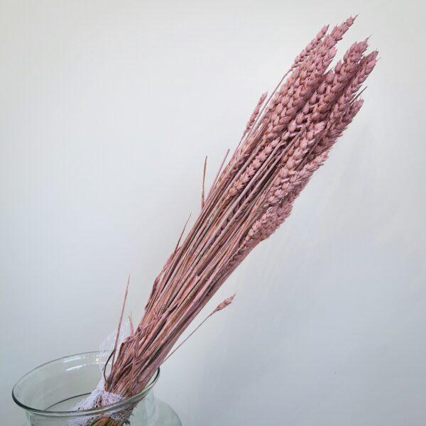 Droogbloemen Roze Tarwe
